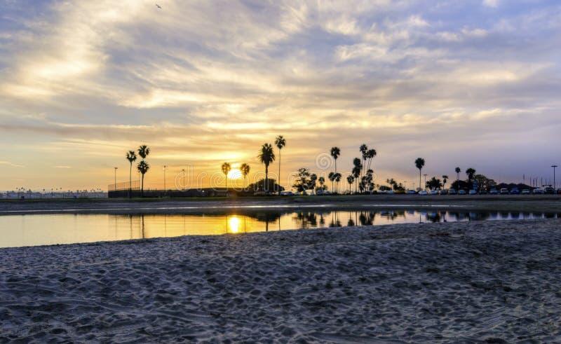 Louro da missão, San Diego, Califórnia foto de stock
