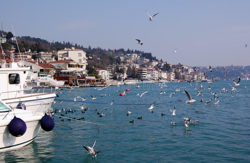 Louro de Bebek, Istambul foto de stock royalty free