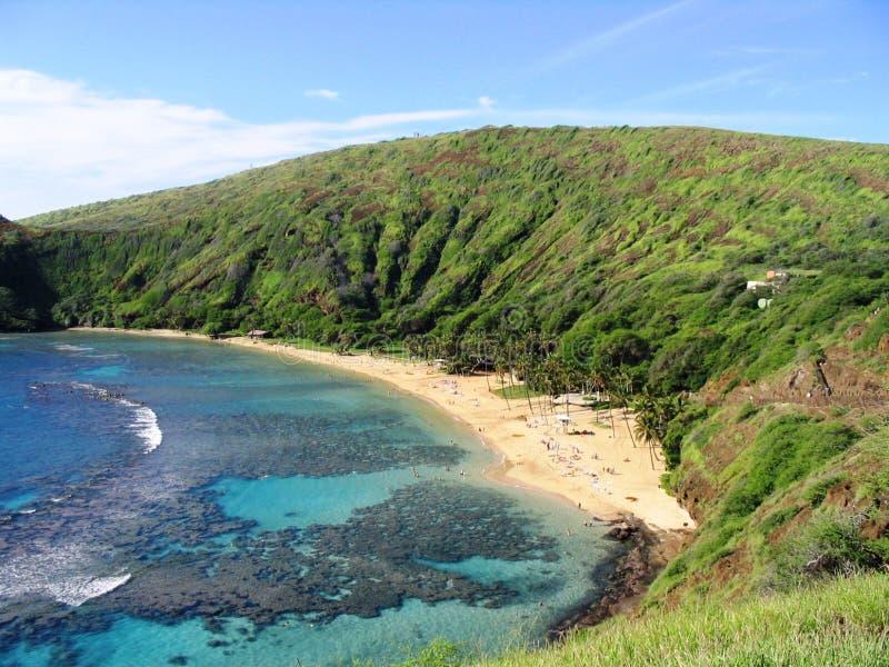 Download Louro de Hanauma foto de stock. Imagem de tropical, praia - 113542