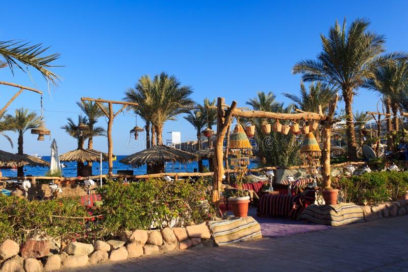 Louro de Naama em Sharm El Sheikh fotografia de stock royalty free