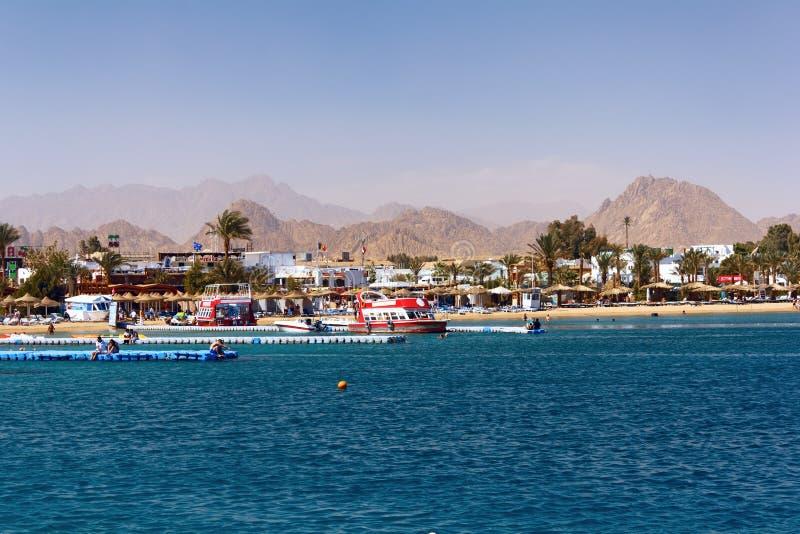Louro de Naama em Sharm El Sheikh imagens de stock royalty free
