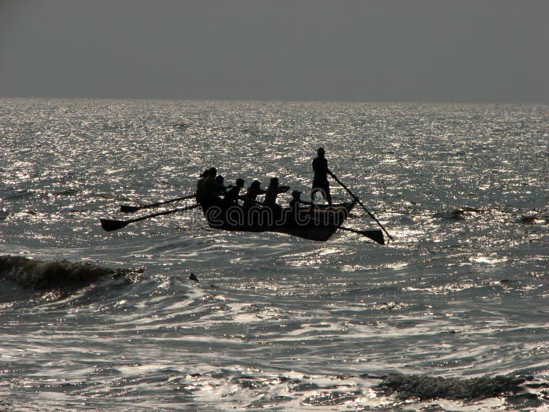 Louro de pescadores de Bengal imagem de stock