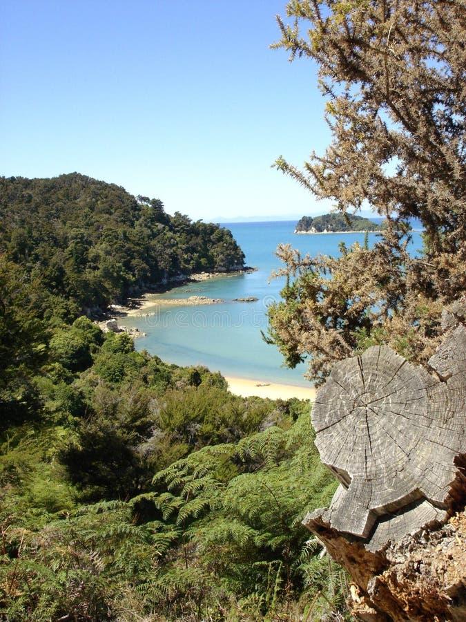 Louro de Tinline, parque nacional de Abel Tasman imagem de stock royalty free