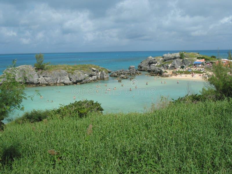 Louro do tabaco de Bermuda imagens de stock royalty free