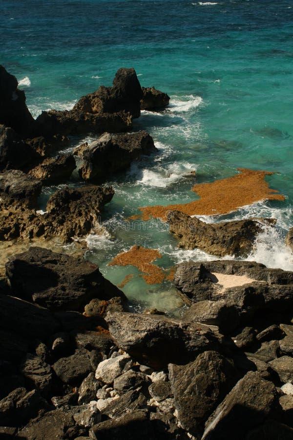 Louro em ferradura Bermuda foto de stock royalty free