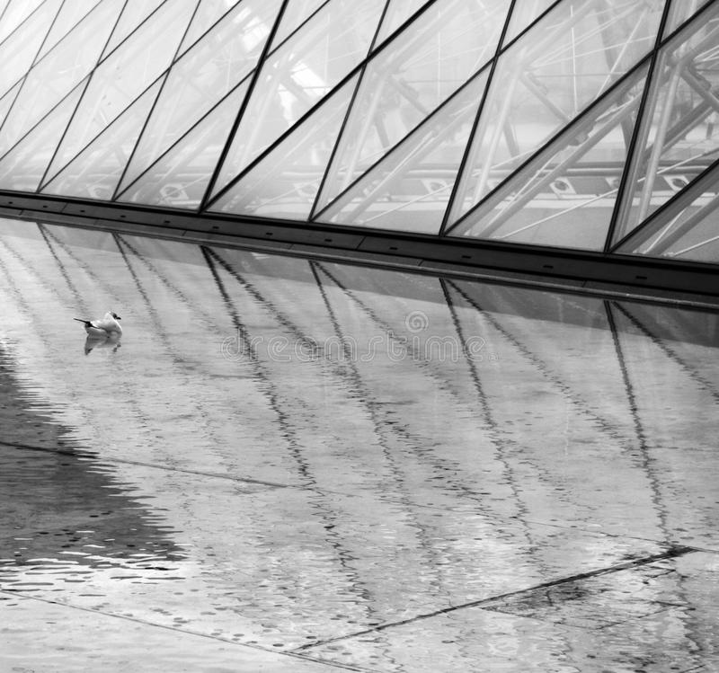 The Louvre Pyramid and Seagull stock image