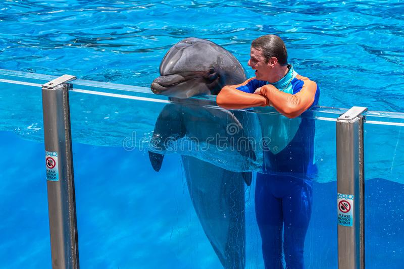 Lovable dolphin and trainer in Dolphin Days show at Seaworld. Orlando, Florida. July 29, 2019. Lovable dolphin and trainer in Dolphin Days show at Seaworld stock photos
