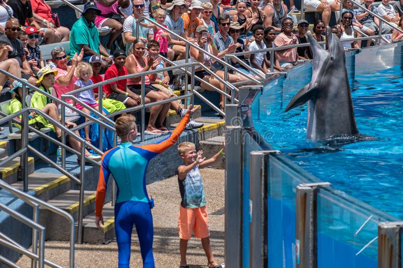 Lovable dolphing playing with trainer and little child in Dolphin Days show at Seaworld 2. Orlando, Florida. July 29, 2019. Lovable dolphing playing with trainer stock photo