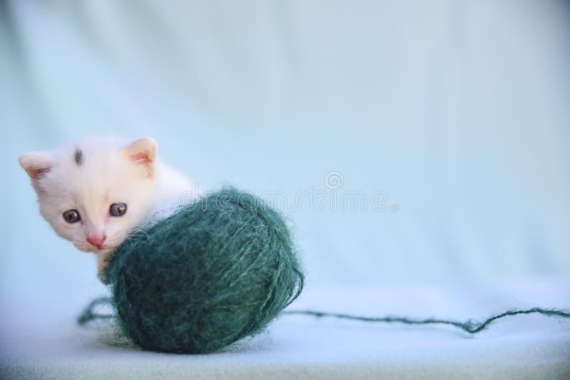Tender and fluffy white kitten plays with a ball of green wool. Lovable and fluffy white kitten plays with a ball of green wool stock image