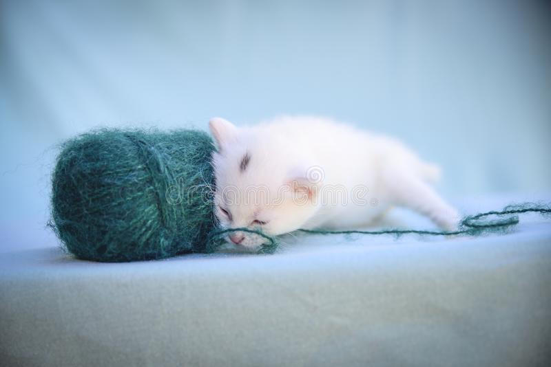 Tender and fluffy white kitten plays with a ball of green wool. Lovable and fluffy white kitten plays with a ball of green wool royalty free stock photography