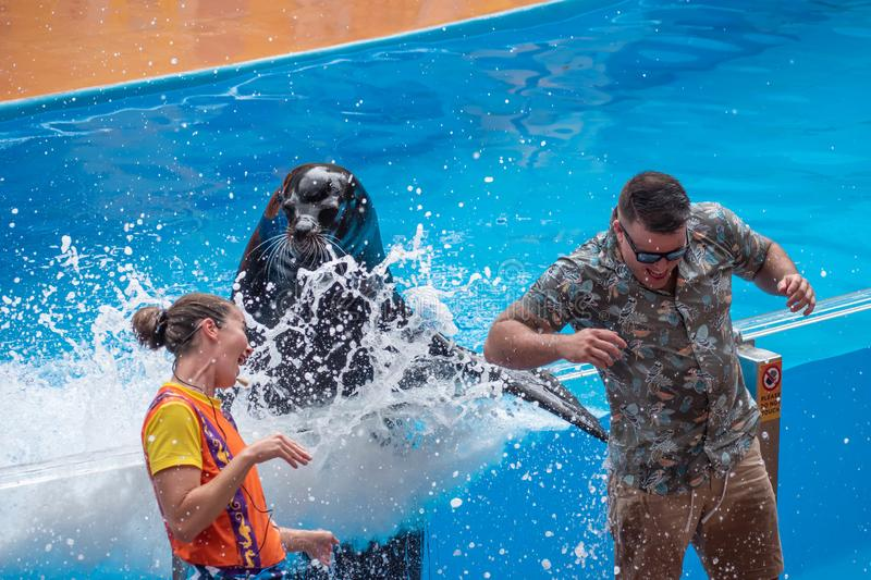 Lovable sea lion splashing the public man with his fin in Sea Lion High show at Seaworld 3. Orlando, Florida. July 26, 2019. Lovable sea lion splashing the stock photos