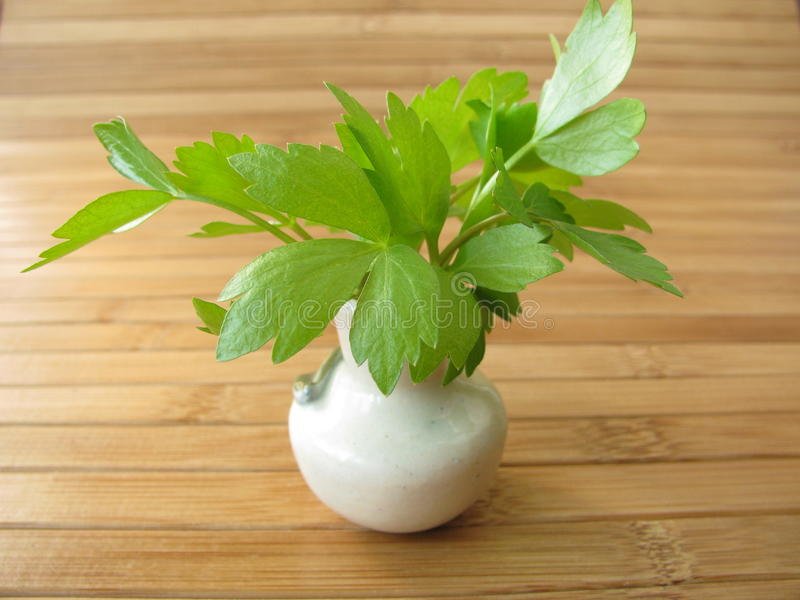Download Lovage in vase stock photo. Image of leaves, garden, medical - 18988788