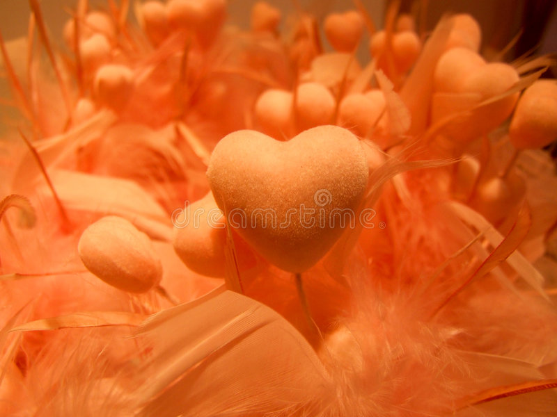 Love. Orange hearts with feathers symbolizing love royalty free stock images