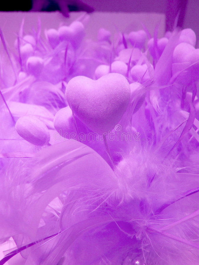 Love. Purple hearts with feathers symbolizing love royalty free stock image