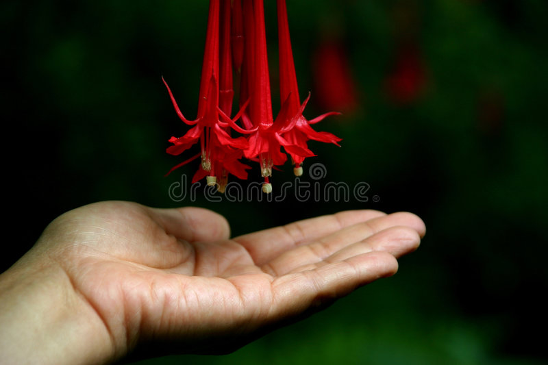 Download Love stock photo. Image of flower, gentle, fingers, female - 456508