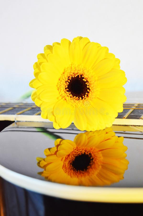 Love ardor. A beautiful yellow flower on the strings of a guitar, creating its reflection on the instrument, suggesting love ardor royalty free stock photos
