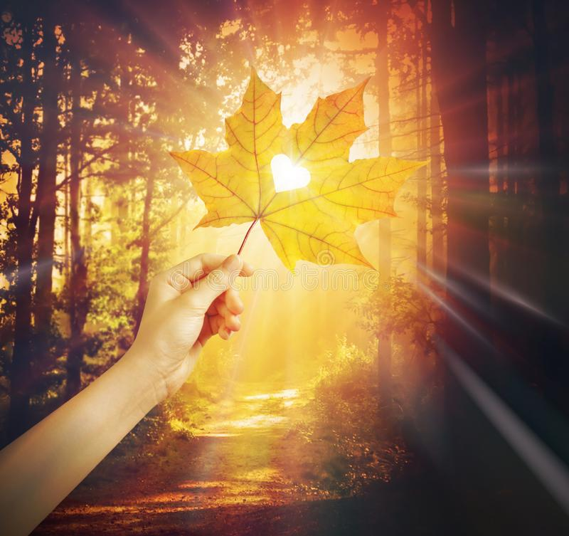 Free Love Autumn Background, Heart Shape Leaf Royalty Free Stock Image - 160622606