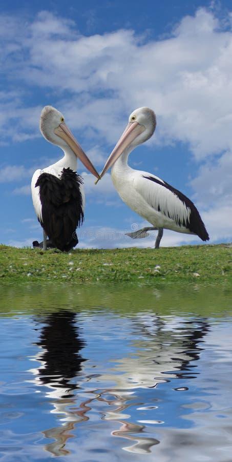 Free Love Birds Royalty Free Stock Image - 1594956