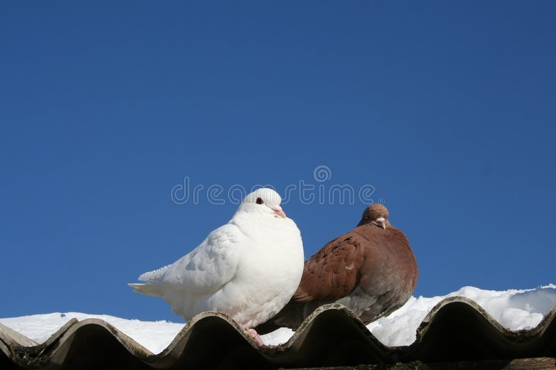 Download Love Birds Royalty Free Stock Images - Image: 469359