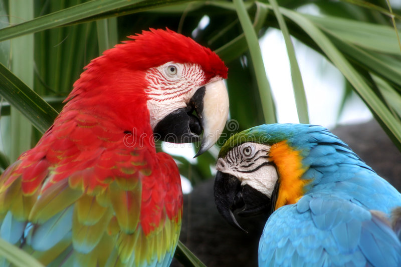 Love of Birds royalty free stock image