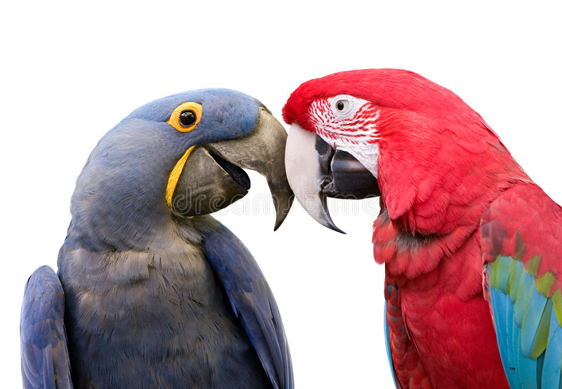 Love Birds. Couple in love and showing affection royalty free stock photos