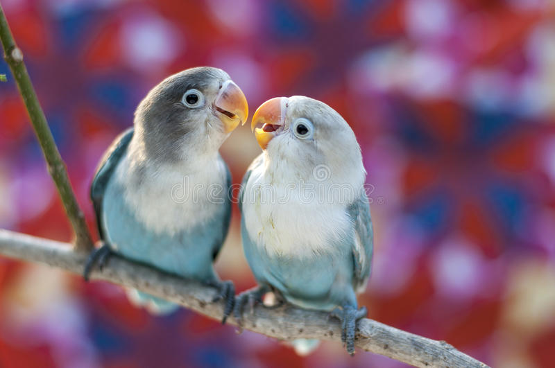 Love birds. With colorful background