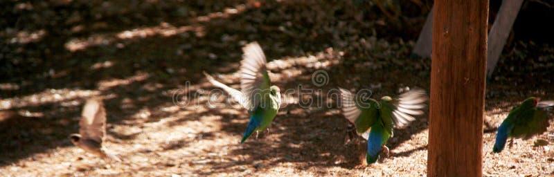 Love Birds taking Flight stock photo