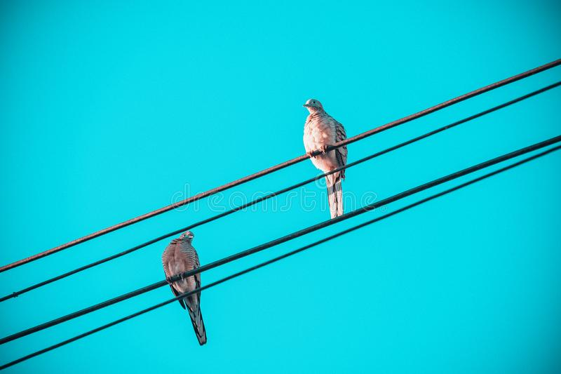 Love of birds, Two little birds on electric cable line, Birds perched on electrical wires with clear vintage sky as background. Ok royalty free stock photography