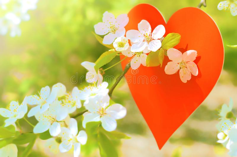 Love, blooming garden, spring, red heart. Branch of flowering plum in the spring garden. royalty free stock images