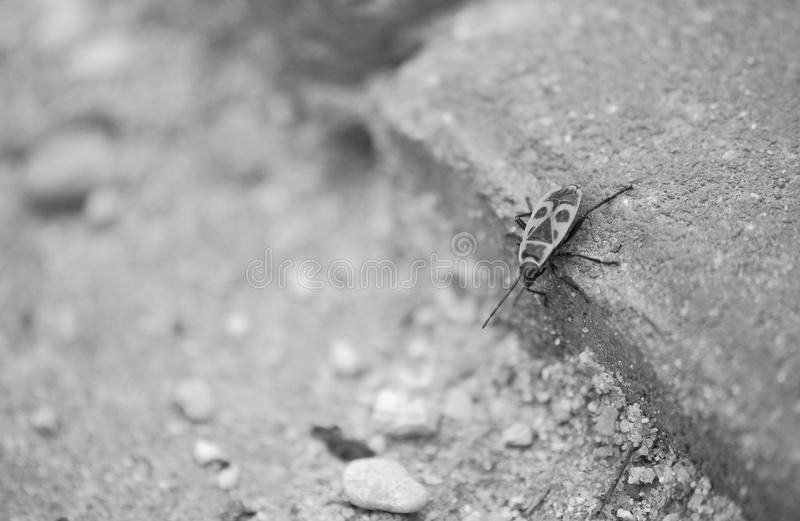 Love bug royalty free stock photos