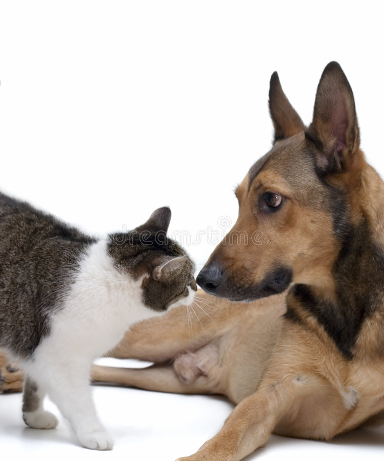 Love between Dog & Cat. Cats and Dogs can go together. They love each other and they're kissing royalty free stock image