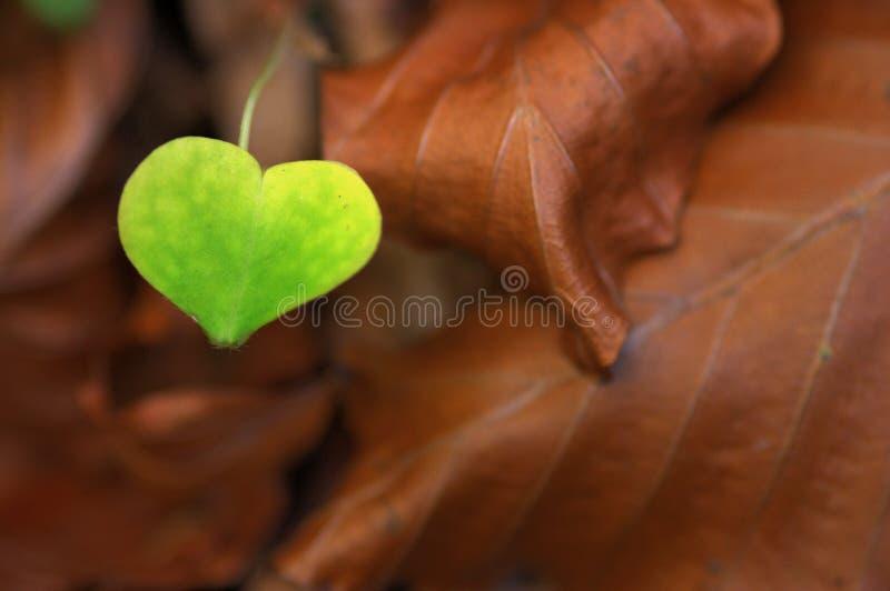 Love is Everywhere stock photo