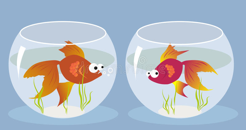 Love at first sight. Cartoon goldfish smitten by a girl fish sitting in the another fishbowl, vector illustration, EPS 8, no transparencies vector illustration