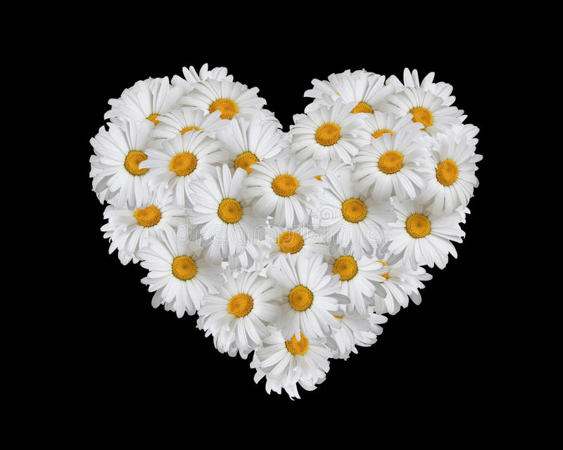 Love, heart of daisies royalty free stock photo
