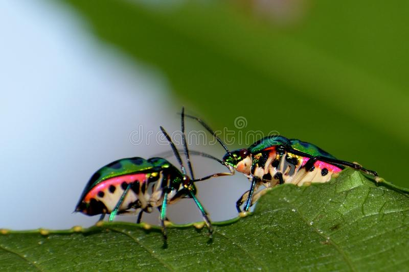 love of insects royalty free stock photo
