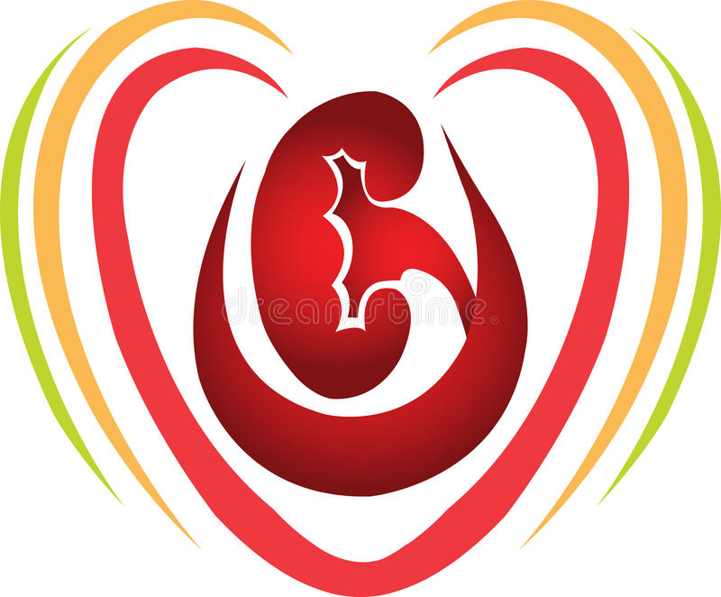 Love kidney. Illustration art of a love kidney with isolated background stock illustration