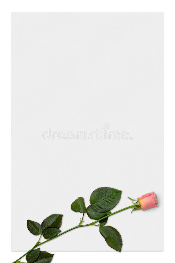 Love letter paper with red rose background stock illustration