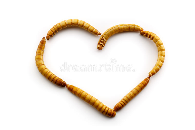 Love mealworms. Some people just love mealworms. Healthy food of the future royalty free stock images