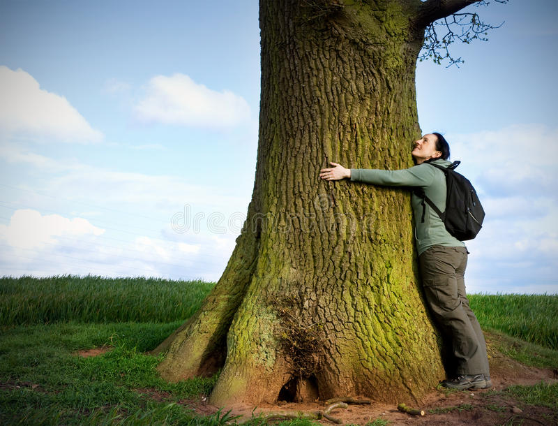 Love nature. Woman hugging huge tree trunk royalty free stock image