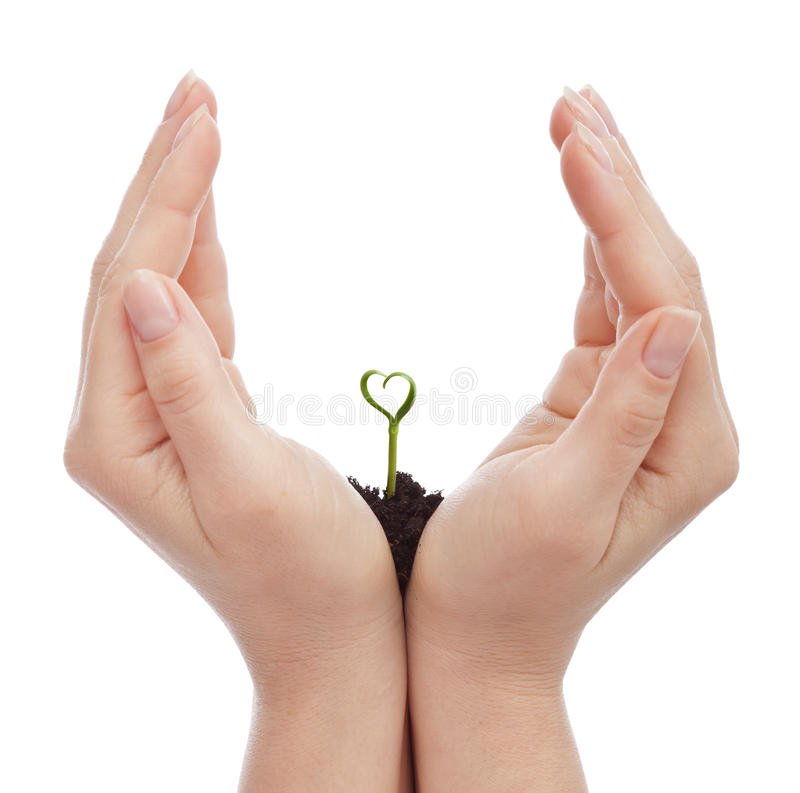Love for nature. Love and protect nature concept - woman hand shielding heart shaped seedling stock photography