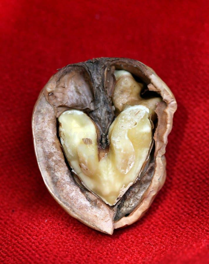 Love Nut Stock Photography