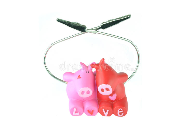 Download Love of pigs stock photo. Image of photograph, holder - 23845654