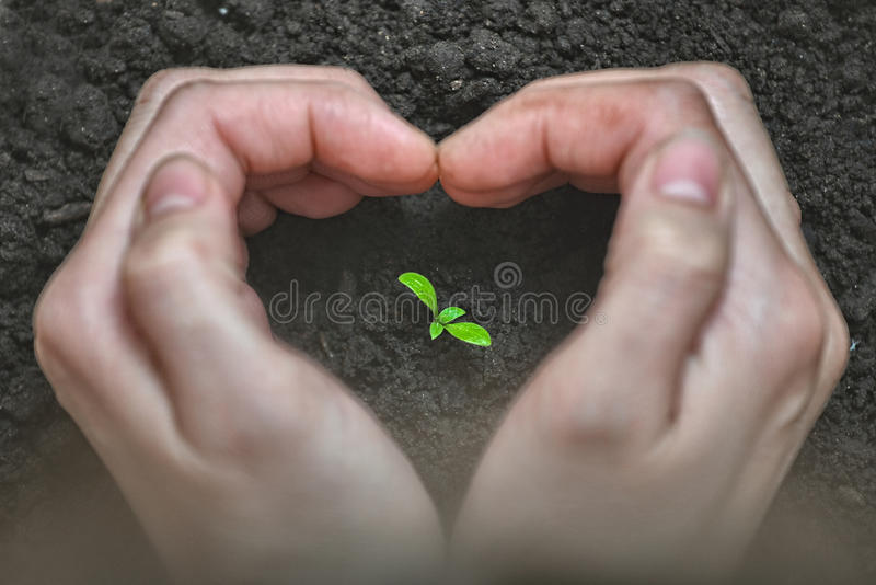 Love and protect nature. Woman Hands forming a heart shape around a small plant. Ecology and care concept. royalty free stock photo