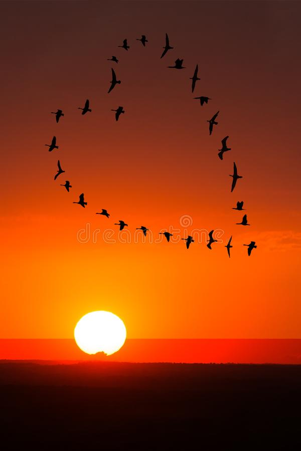 Sunrise, Sunset Love, Romance, Birds. Love and romance concept of a flock of birds flying in a heart formation with a a sunrise or sunset behind them
