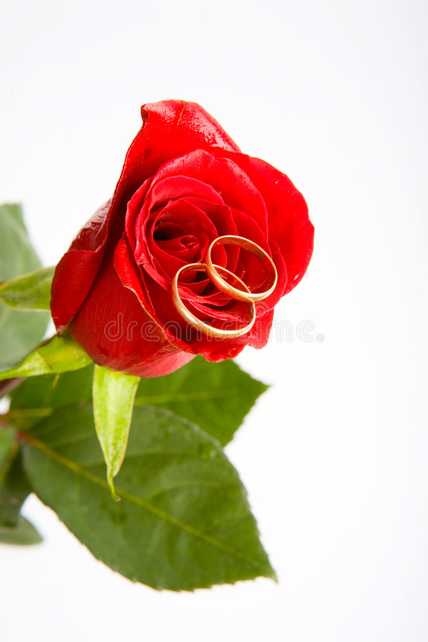 Download Love on the rose stock image. Image of holiday, dating - 5191559