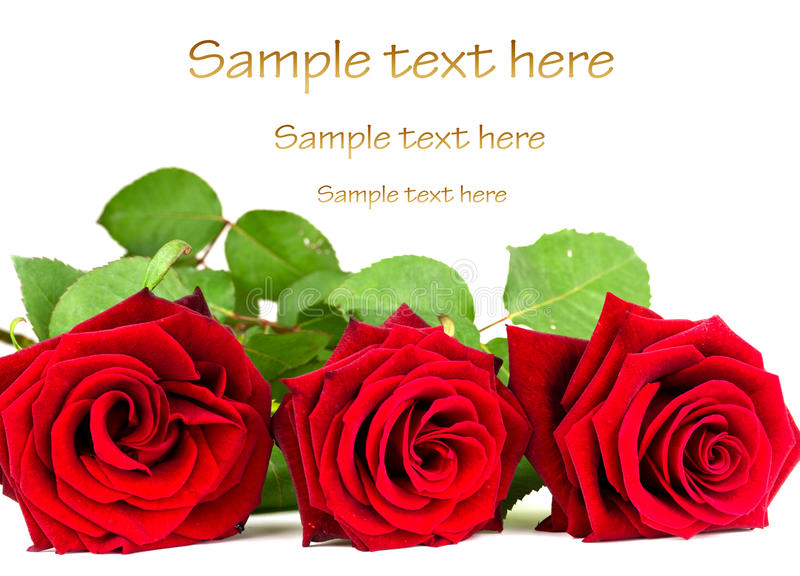 Download Love roses stock image. Image of aroma, color, gift, holiday - 20084141