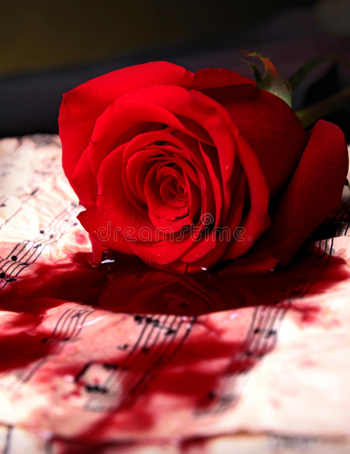Love song. Red rose and score music royalty free stock images