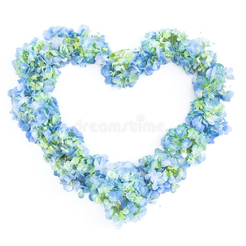 Love symbol of hydrangea flowers on white background. Flat lay, top view. Floral background royalty free stock images