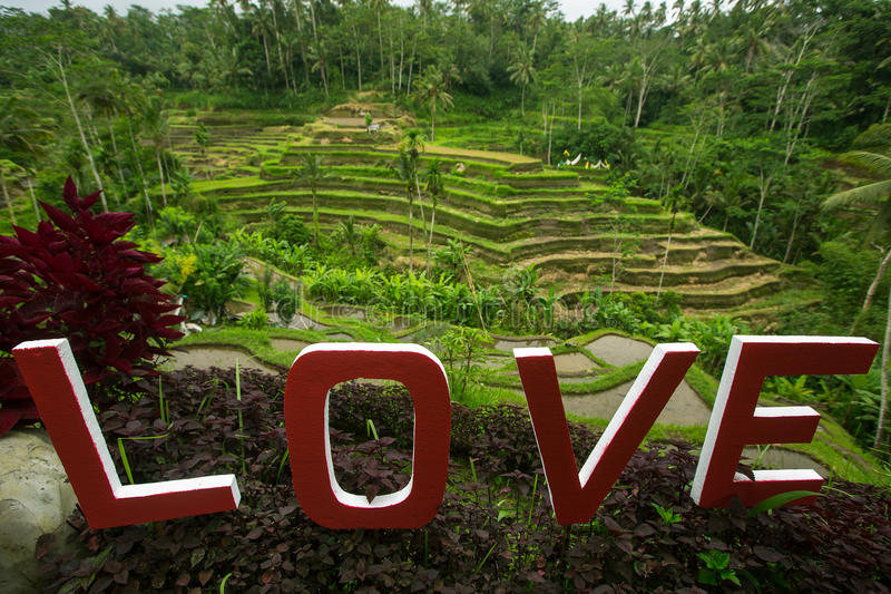 Love text written on the green rice terraces. Bali. Love text written on the green rice terraces. Bali, Indonesia royalty free stock photo
