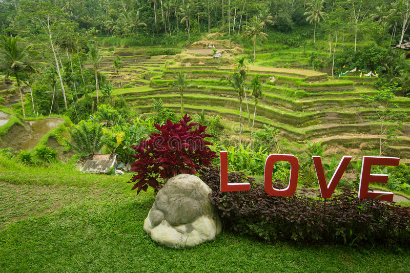 Love text written on the green rice terraces. Bali, Indonesia stock image